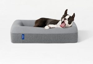impulse-notion-blog-finding-the-best-dog-bed-for-your-dog